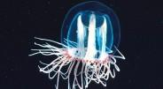 Medūza Turritopsis nutricula pripažinta vieninteliu pasaulyje žinomu gyvūnu, kuris gali savarankiškai regeneruotis ir atsinaujinti. Teoriškai, šis ciklas gali kartotis iki […]