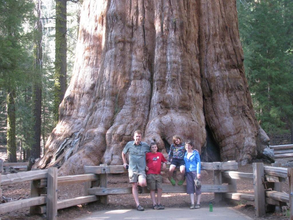 Didžiausias pasaulio medis