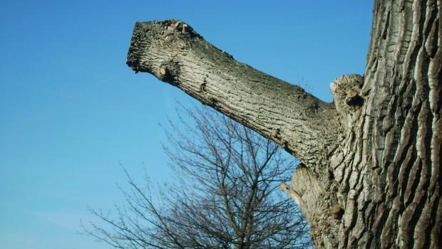 1.Seniausias medis. Prometėjas.Amžius -4862-5000 metų (augti galėjo nuo 3000 metų prieš Kristų!). Medį 1950 metais nukirto universiteto studentas, kuriam […]