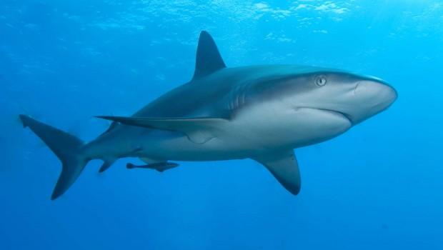 Ką bendro turi moteris ir ryklys? Ryklys ir moteris. Atrodo du visiškai prasilenkiantys dalykai, tačiau šį bei tą šie du […]