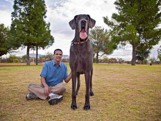 George Darius Blosom didžiausia šuo pasaulyje