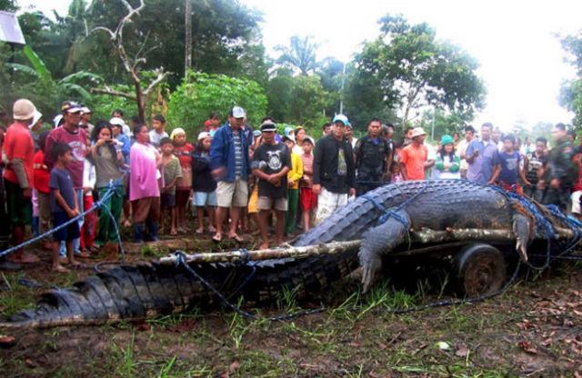 Didžiausias krokodilas