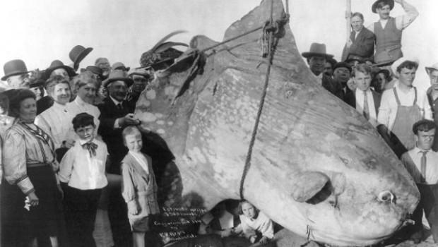 4. Didžiausias pasaulyje triušis. Susipažinkite su 1 metro ir 40 centimetrų ūgio triušiu vardu Darius iš Vorčesterio, Anglijoje. Jo svoris […]