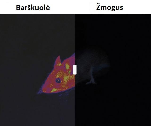 Barškuolė /  Kaip gyvūnai mato pasaulį