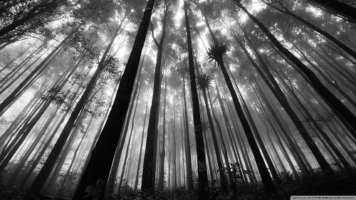 """201. Didžiausias krioklys pasaulyje – Anchel (""""angelas""""), 979 m aukščio – yra Venesuelos atogrąžų miškuose. 1933 m. jis buvo pavadintas […]"""
